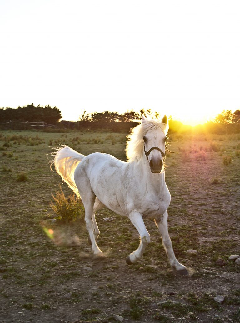Horse running through a field as sunlight shines brightly behind it.