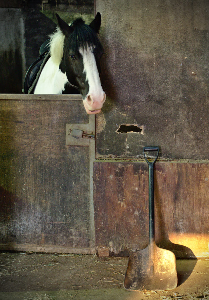 Horse yard with pony in stable